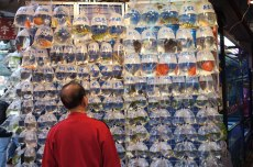 Customer at Fish Shop